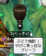 Maple110908_203356.jpg