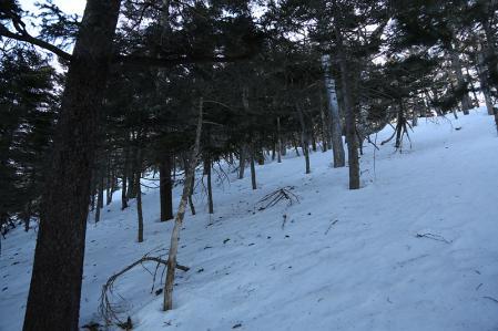 樹林帯の急登