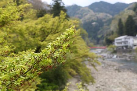 香嵐渓 新緑が美しい