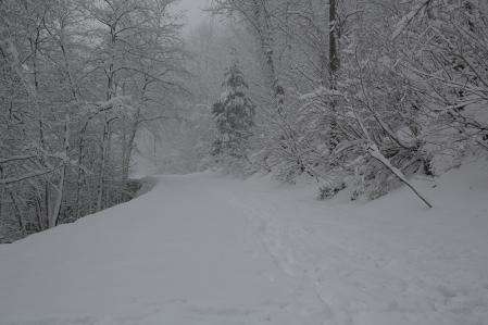 よもやの大雪