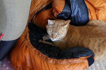 虎太 寝袋をガジりを見つかる