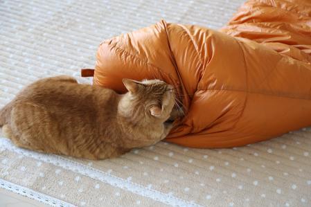 虎太 寝袋と格闘