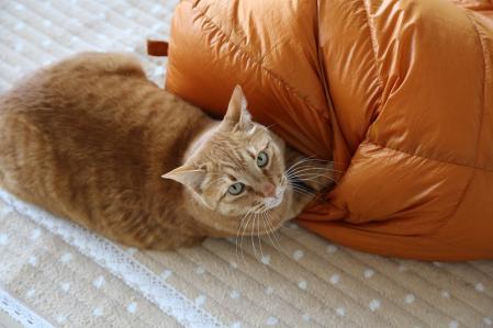 虎太 寝袋と格闘を見つかる