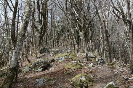 縦走路は笹と森の中の繰り返し