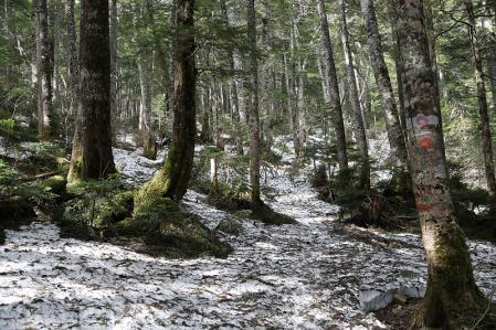 積雪は2000m付近から