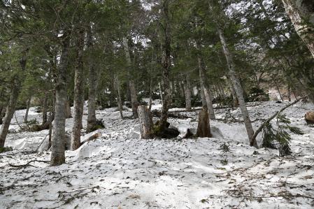 キツイ樹林帯の雪道