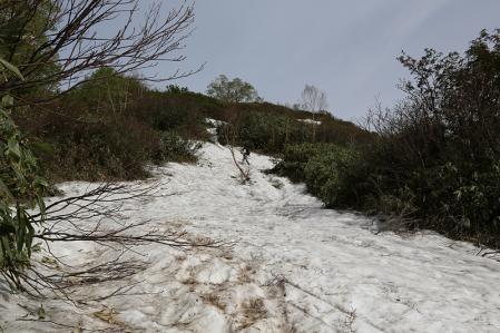大倉山まではたまに雪渓を渡る