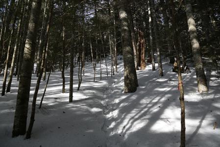 杣添尾根は静かな樹林帯で始まる