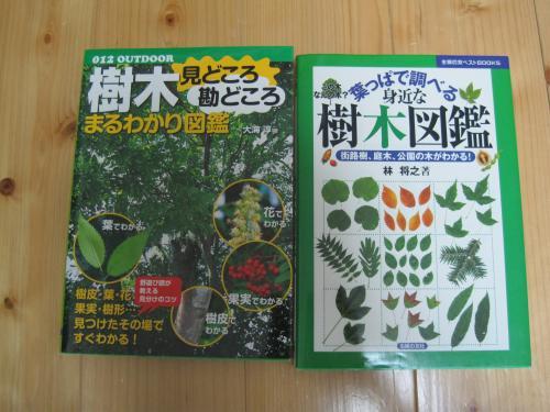 IMG_6488_樹木の本