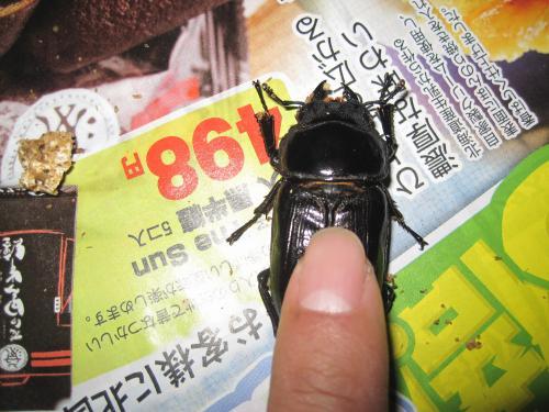 IMG_6842_初YG羽化