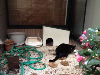 クロと猫小屋