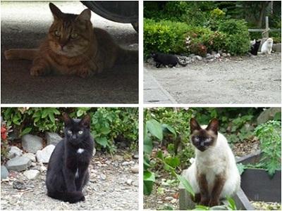 猫にいっぱい会えました♪
