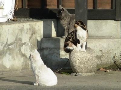 猫会議ちぅ