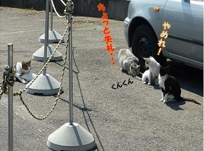 山形の猫たち.jpg