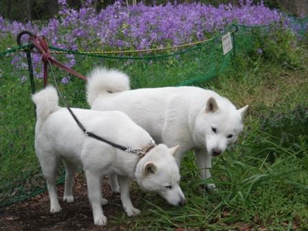 2012.4.11 北の丸公園・花よりサラダバー
