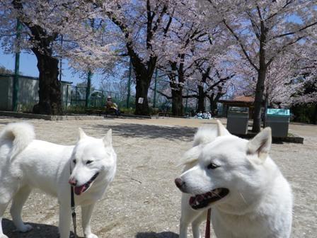 2012.4.12 羽根木公園1