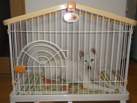 20100129ハウス