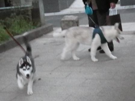 2012.4.20 スノウ君&レックス君