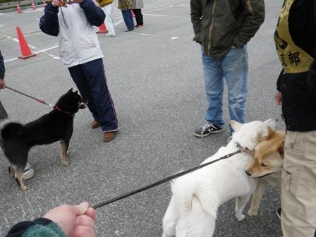 2012.4.22 獣猟競技の順番待ち