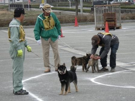 2012.4.22 仔犬一部牡・比較審査