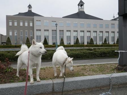 2012.4.22 山野辺町庁舎の前で
