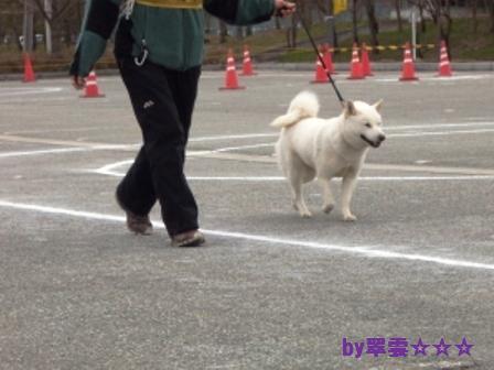 2012.4.22 花鈴・比較審査2