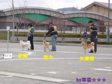 2012.4.22 花鈴・比較審査1
