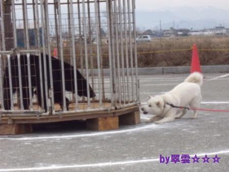 2012.4.22 花鈴・獣猟競技3