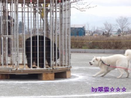 2012.4.22 花鈴・獣猟競技2