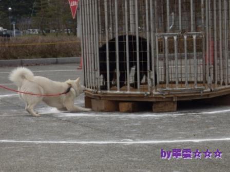 2012.4.22 花鈴・獣猟競技1