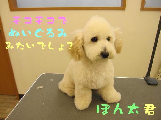12日 ブログ ぽんちゃん2