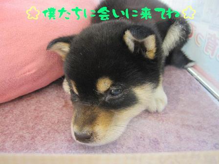 22日 ブログ豆4