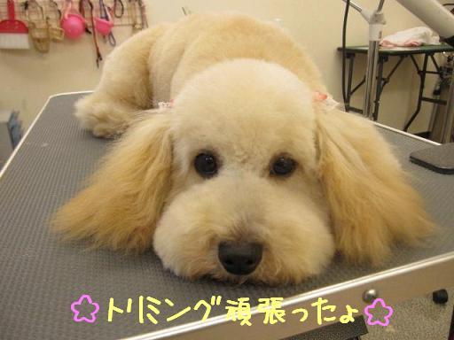 11日ブログまろんちゃん2
