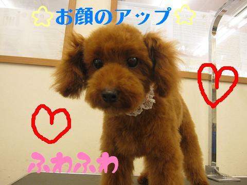 ブログ ムギちゃん2