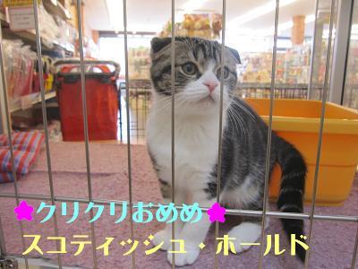 ブログ14日ネコ