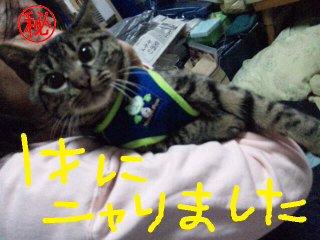moblog_90964520.jpg