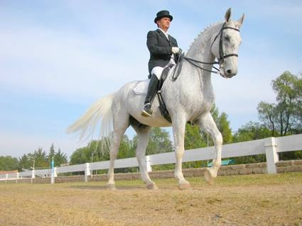 default-ehow-images-a04-h9-o8-horse-learn-dressage-800x800.jpg