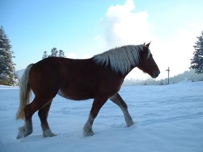 default-ehow-images-a07-9c-cb-determine-horse-warm-enough-800x800.jpg