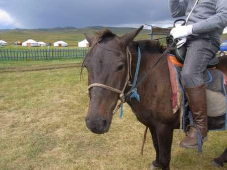 私が乗った元気な馬