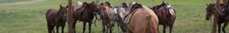 騎馬トレッキング
