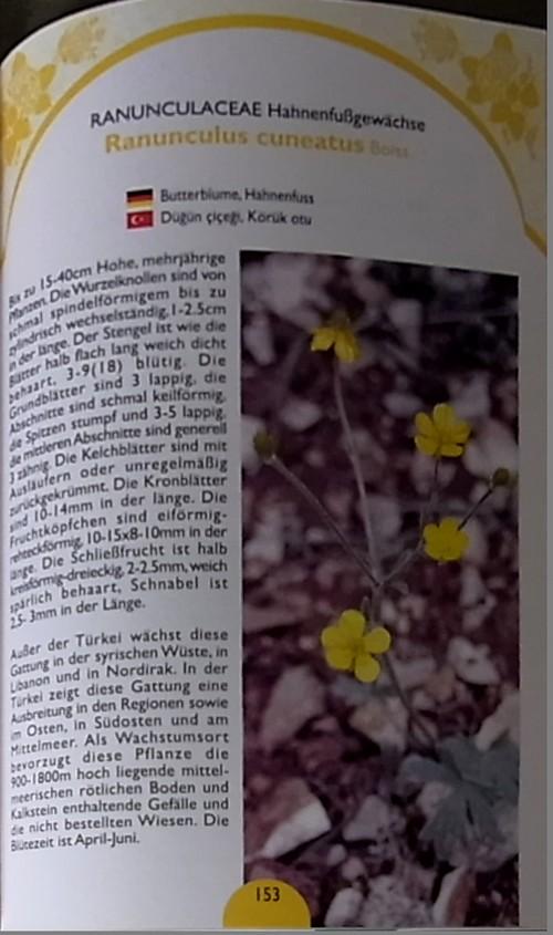 トルコの植物内容