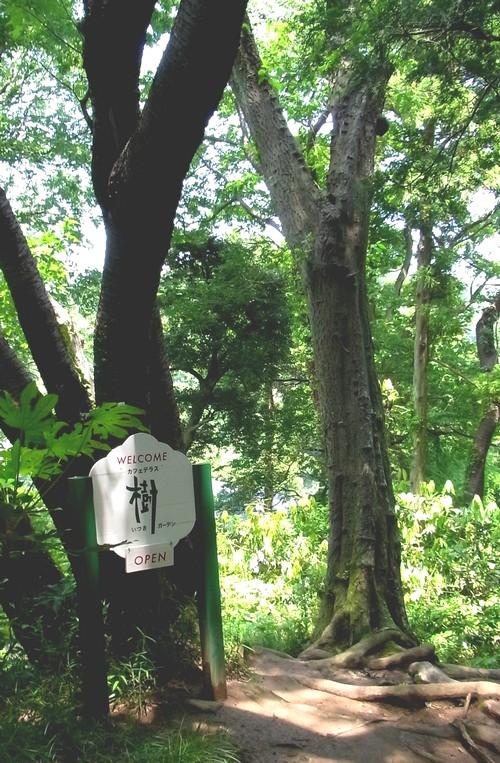 樹ガーデン入口(ハイキングコースより)