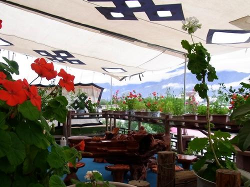 テラスで植物談義-B 667