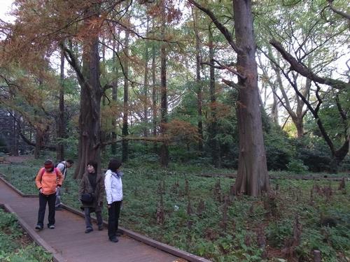 20111.11新宿御苑-2 069
