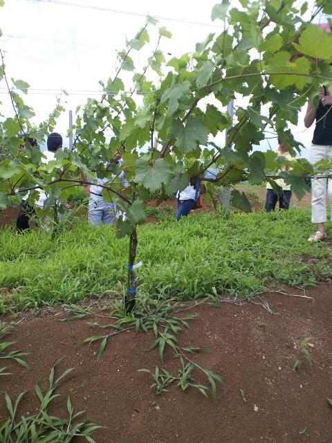 植樹1~2