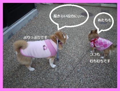 犬が2 (1)