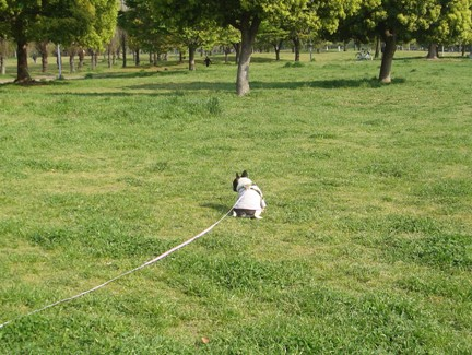モーニングお散歩3