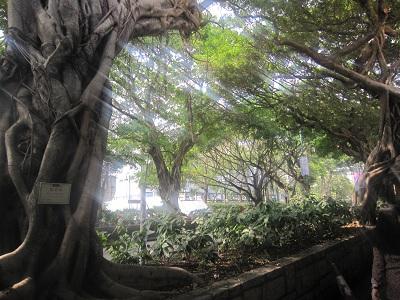 チム 大木