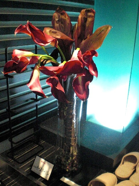 $EASTER  LILY's  blog-09111501
