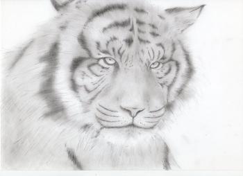 鉛筆画 トラ